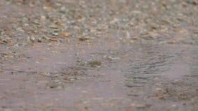 Le gocce dell'acqua cadono in una pozza Movimento lento video d archivio
