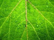 Le gocce di acqua verdi della foglia dettagliano il fondo immagini stock libere da diritti