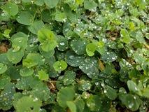 Le gocce di pioggia 1 fotografia stock libera da diritti