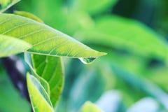 Le gocce di pioggia Fotografia Stock