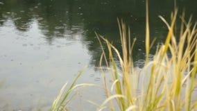 Le gocce di pioggia cadono nel lago stock footage