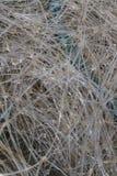 Le gocce di pioggia hanno sospeso nella rete da pesca di nylon, macro Immagine Stock