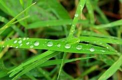 Le goccioline in anticipo in erba Fotografia Stock Libera da Diritti