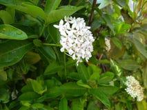 Le goccioline di acqua attaccano ai petali del fiore fotografia stock libera da diritti