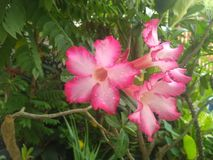 Le goccioline sono sui petali del fiore fotografia stock libera da diritti