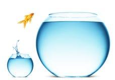Le Goldfish sautant de la cuvette Photographie stock