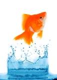 Le Goldfish saute image libre de droits