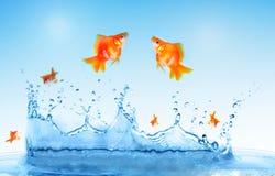 Le Goldfish saute Photo libre de droits