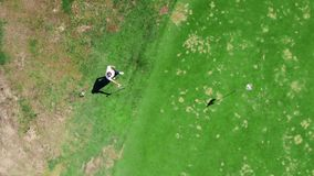 Le golfeur masculin joue sur un champ, utilisant un club en métal banque de vidéos