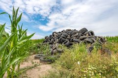 Le gomme di automobile rotte hanno accatastato fino ad una montagna in un campo di grano Fotografie Stock Libere da Diritti