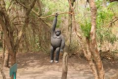 Le gorille en bois accroche sur un arbre. Photos libres de droits