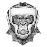 Le gorille, singe, imitent la boxe de port animale de casque de boxeur d'animal sauvage d'illutration de forme physique de sport  Image stock
