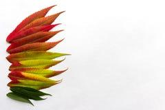 Le gradient a coloré des feuilles disposées dans une rangée sur le côté gauche d'im Photos stock