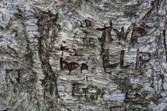 Le graffiti d'arbre a découpé dans un tronc d'arbre Images libres de droits