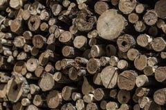 Le grain de notation de tronçon d'arbre donne au déboisement une consistance rugueuse images libres de droits