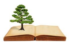 Le grand accroissement d'arbre d'un livre Photos libres de droits