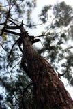 Le grand arbre images libres de droits