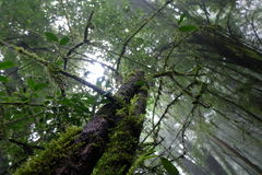 Le grand arbre dans la forêt tropicale Photographie stock libre de droits