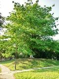Le grand arbre en parc regarde si beau et arbre, avant de s qu'une photo de poteau vue regarde si attrayante photographie stock