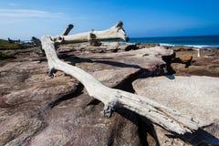 Le grand arbre oscille l'océan Photographie stock