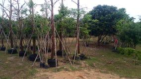 Le grand bien mobilier d'usine d'arbre dans le sac prêt à être mis dans la terre s'est préparé au jardin Photos libres de droits