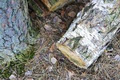 Le grand bois Image libre de droits