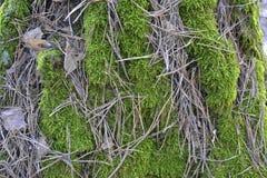 Le grand bois Images libres de droits