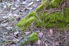 Le grand bois Images stock