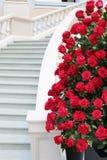 Le grand bouquet lumineux des roses s'approchent de l'escalier. Photos stock