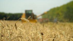 Le grand cartel récolte la culture de blé Le centre de l'appareil-photo sur le blé Par un faible fond là va le cartel clips vidéos