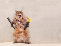 Le grand chat hirsute est position très drôle groomer 10 Images stock