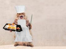 Le grand chat hirsute est position très drôle, le cuisinier 10 Photo libre de droits