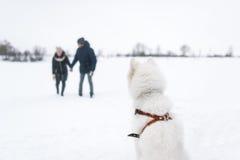 Le grand chien blanc observe les couples affectueux dans le jour d'hiver Photographie stock libre de droits
