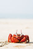Le grand crabe rouge se reposant sur le sable Photo libre de droits