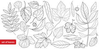 Le grand ensemble #1 de vecteur avec le contour différent laisse dans le noir d'isolement sur le fond blanc Feuillage fleuri d'ar illustration stock