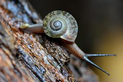 Le grand escargot du monde photographie stock