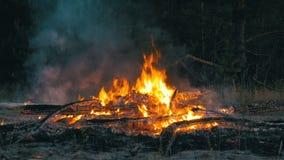 Le grand feu brûlant la nuit banque de vidéos