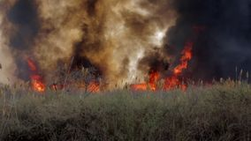Le grand feu dans la zone de steppe banque de vidéos