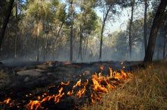 Le grand feu de forêt Images libres de droits