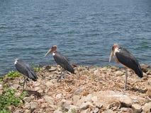 Le grand lac Victoria Nansio, Ukerewe, Tanzanie Photos stock