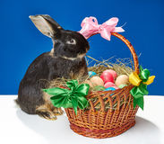 Le grand lapin essaye de s'élever dans le panier Photos stock