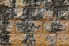 Le grand mur de briques brun clair très sale avec de grandes taches noires donnent à la photo une consistance rugueuse Photo libre de droits