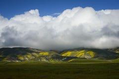 Le grand nuage au-dessus de la sauvage-fleur a couvert la chaîne de secousse Photographie stock