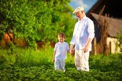 Le grand-père et le petit-fils ensemble sur leur ferme, parmi des pommes de terre rame Photos stock