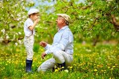 Le grand-papa heureux avec les pissenlits de soufflement de petit-fils font du jardinage au printemps Photographie stock libre de droits