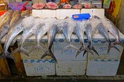 Le grand Roi Indo-Pacifique Mackerels Photo libre de droits