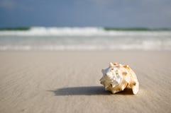 Le grand seashell sur le rivage près ondule images stock