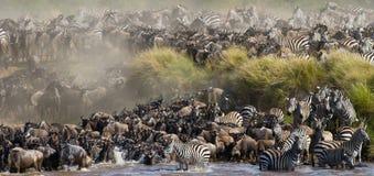 Le grand troupeau de gnou est au sujet de Mara River Transfert grand kenya tanzania Masai Mara National Park image stock