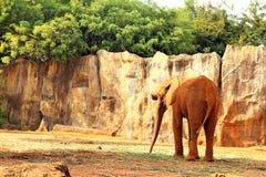 Le grand vieil éléphant au zoo Images stock