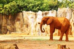 Le grand vieil éléphant au zoo Photographie stock libre de droits